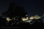 Calimera (Le) – Ulivo nella notte stellata
