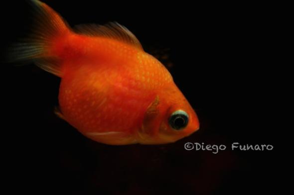 pesce aprile - diego funaro