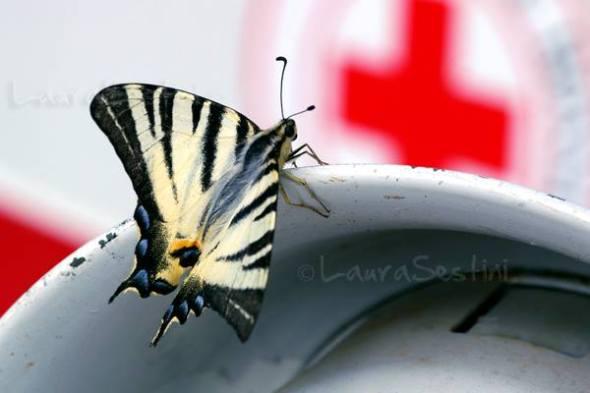 Salviamo le farfalle