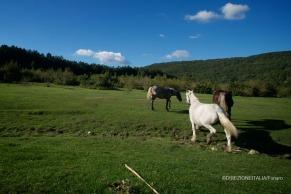 Località Pratarelle, Orvinio (Ri) - Diego Funaro
