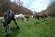 Cavalli al pascolo sul Monte Livata