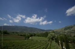 Vino Cesanese del Piglio, il paesaggio. Tra l'alta Valle del Sacco e i monti Ernici crescono i vigneti del Cesanese. Sono coltivati tra i 200 e i 1000 metri s.l.m. su terreni esposti verso ovest e con pendenze spesso superiori al 10%. Si tratta di terreni superficiali, con scarso contenuto di elementi nutritivi, poco adatti allo sfruttamento intensivo, ma particolarmente vocati per una vitivinicoltura di qualità.