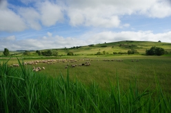 Barcut, pianura transilvana