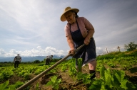 Cartisoara, lavori in campagna